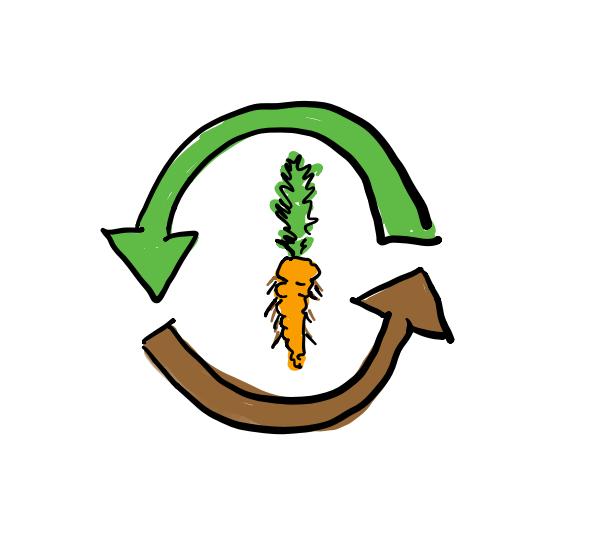 Zeichnung einer Karotte, um die zwei Pfeile einen Kreislauf symbolisieren